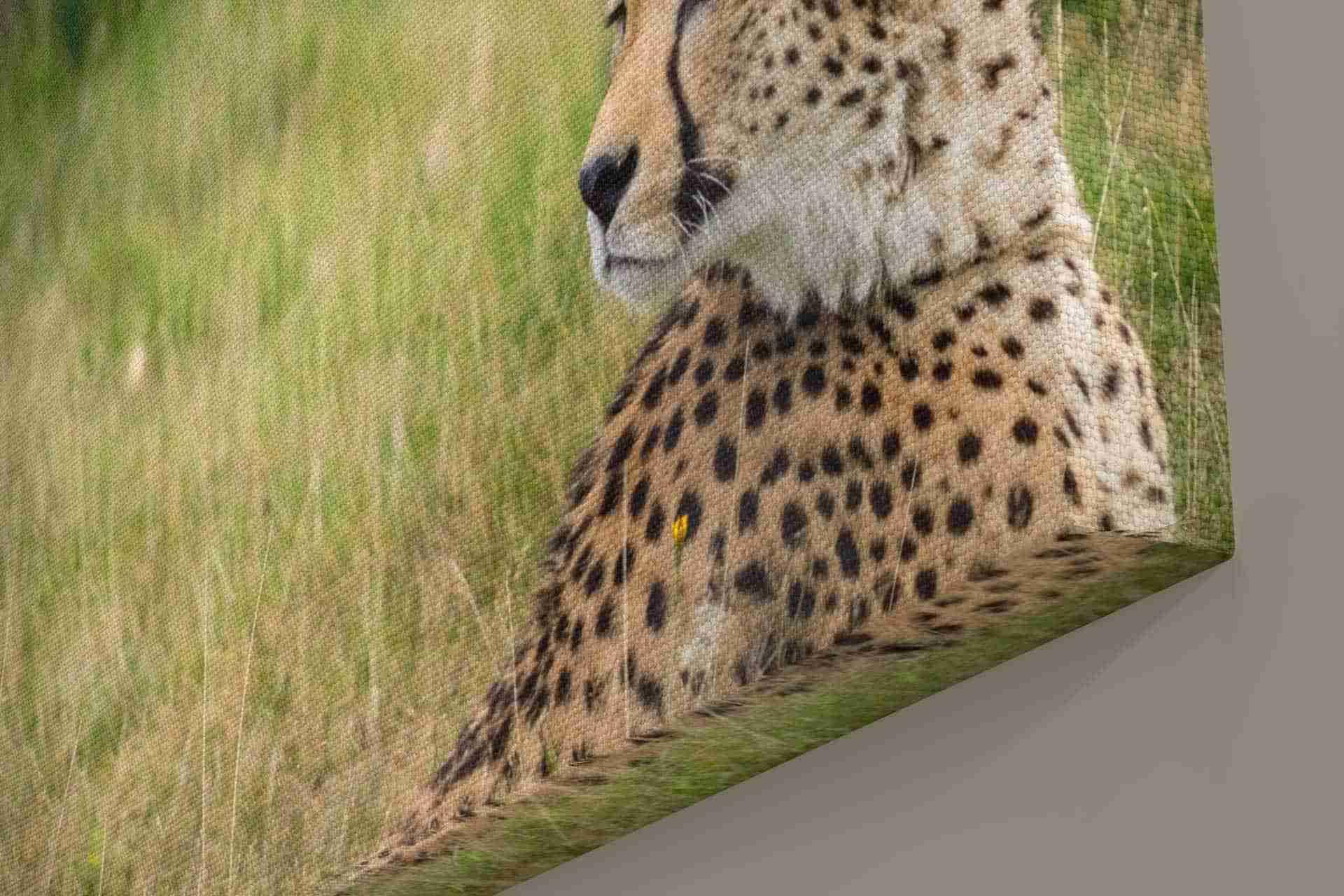 Closeup-Cheetah-1.jpg